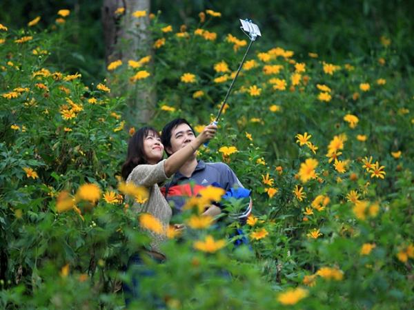 Phượt Ba Vì ngắm hoa dã quỳ, điểm đến thu hút giới trẻ