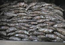 Bắt xe tải chở 3,5 tấn cá thối ở Đà Nẵng