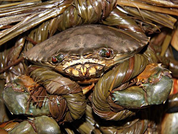 Dân đổ xô nuôi cua biển, đạt năng xuất sản lượng cao