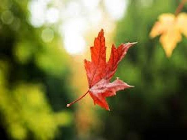 Mơ thấy lá rụng đánh con bao nhiêu trong xsmb