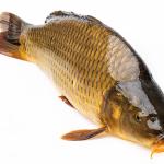 Giải mã chi tiết ý nghĩa giấc mơ thấy cá