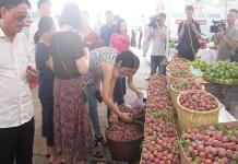 Xuất khẩu đặc sản mận hậu Sơn La sang thị trường Campuchia